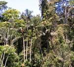 Peru Amazon trips