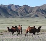 Mongolia tour Gobi Desert