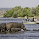 Botswana Safari with Boundless Journeys