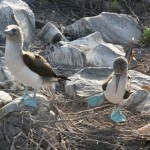 Galapagos Islands Cruises with Boundless Journeys