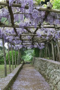 The wysteria pergolas of Villa Cimbrone, on Italy's Amalfi Coast.