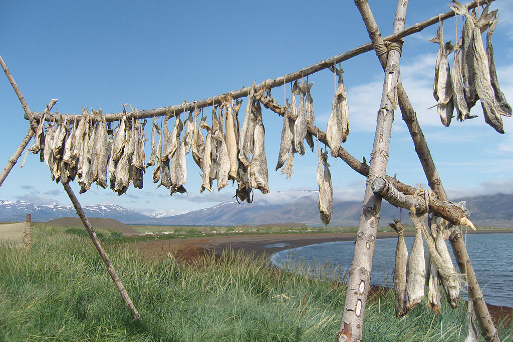 Harðfiskur, a typical fish snack, is line-dried in the Icelandic countryside.
