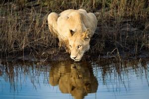 african-safaris-boundless-journeys