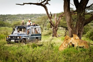 People photographing lions from the truck