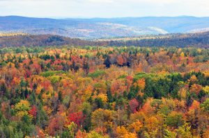 Vermont_fall_foliage_hogback_mountain