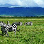 Tanzania's Ngorongoro Crater