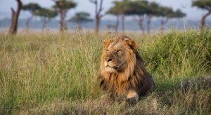 Kenya Custom Safri to see Lions