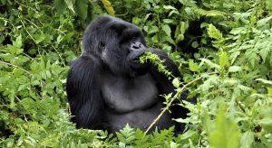 Explore Volcanoes National Park in Rwanda